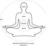 Distribución del Prana en el cuerpo