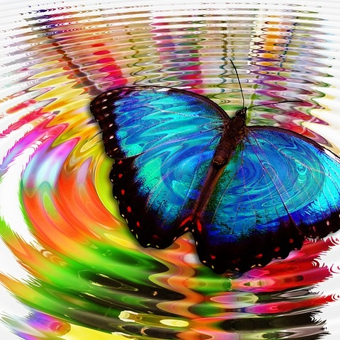 El efecto mariposa, fenómeno que gobierna la mente caótica