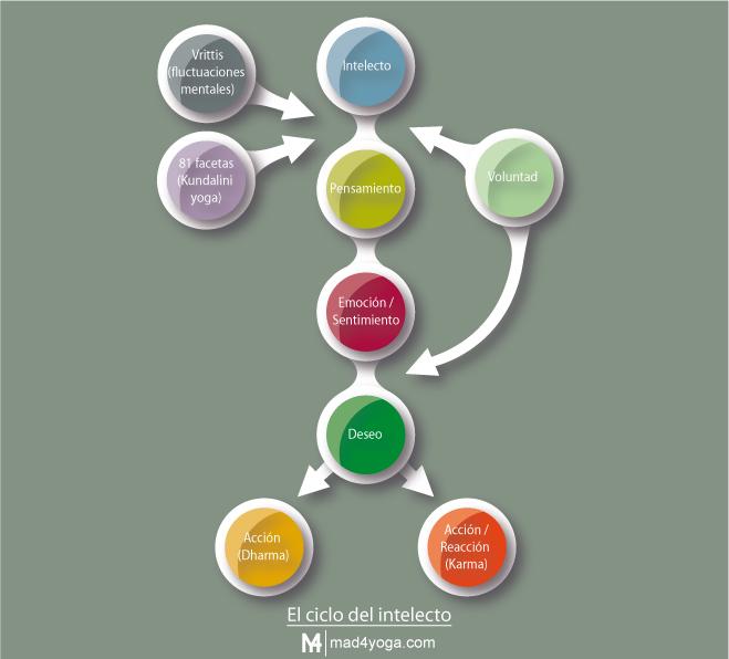 El ciclo del intelecto