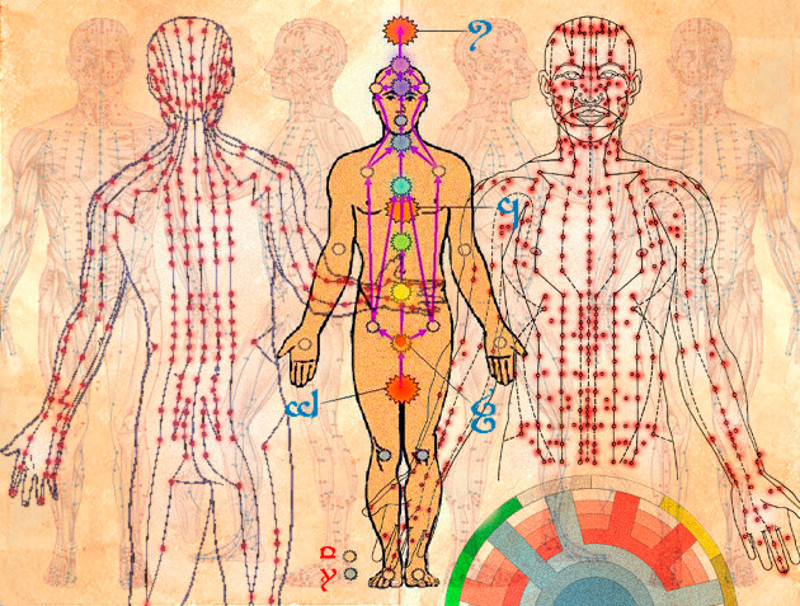 Los chakras en el cuerpo humano