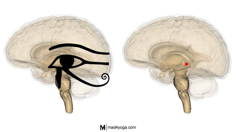 Glandula-pineal-y-Ojo-Egipcio